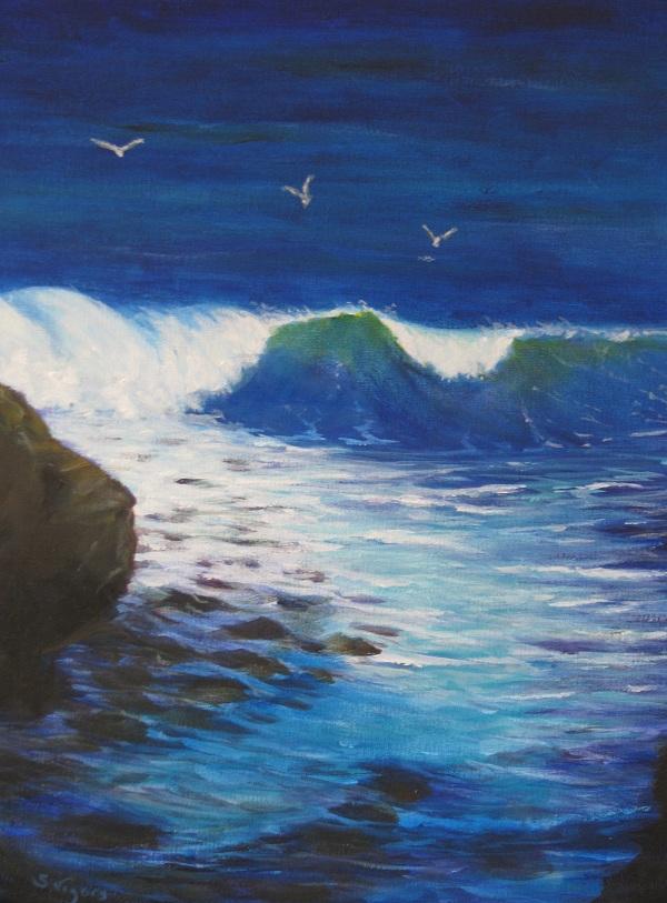 Wild Coast South West by Steve Vigors
